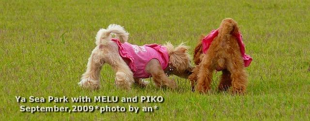 P1050895 2009-09-06 15-30-22