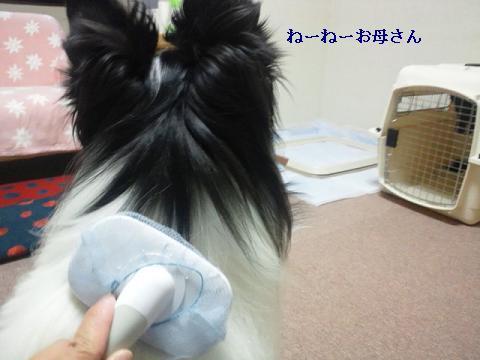 2011060101.jpg