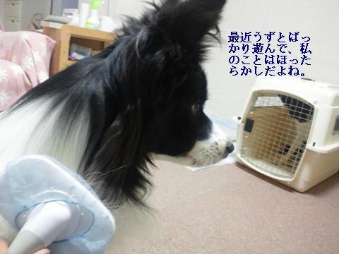 2011060102.jpg