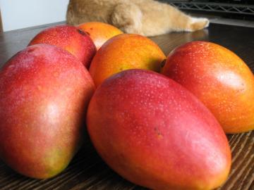 マンゴーはお好きですか?