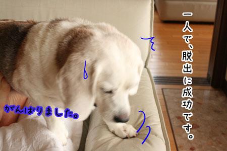 13_20090820154806.jpg