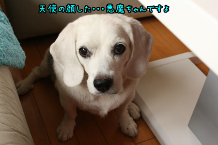 1_20090820145700.jpg