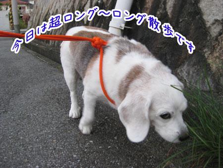 1_20090831201943.jpg