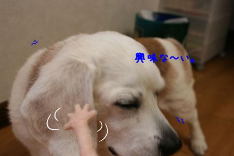 1_20110510184007.jpg