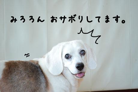 1_20110726171559.jpg