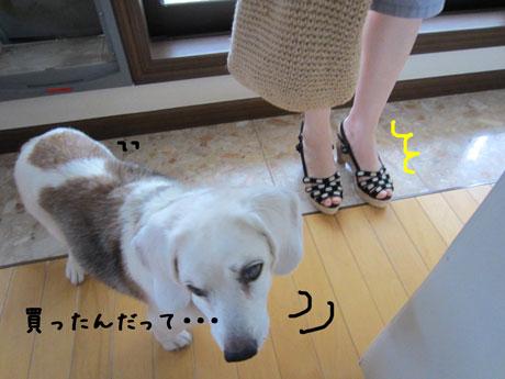 1_20110729000159.jpg