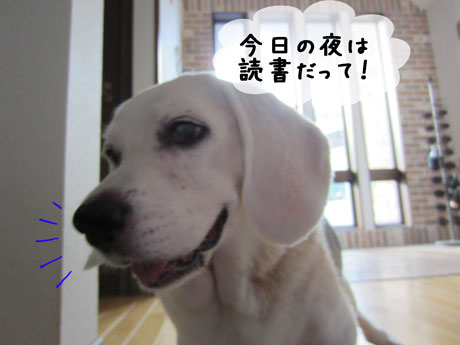 1_20110804171339.jpg