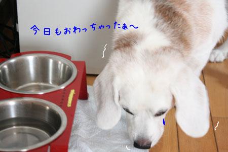 2_20090829180644.jpg