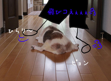 2_20110802171203.jpg