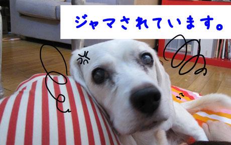 2_20110808143106.jpg