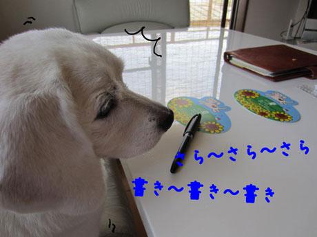 2_20110816154321.jpg