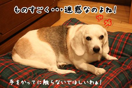 3_20090823000906.jpg