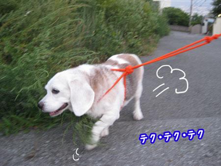 3_20090831201943.jpg