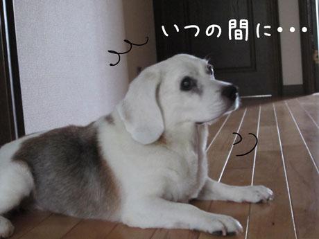 3_20110722190332.jpg