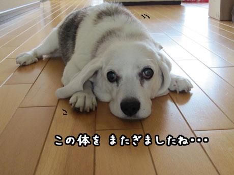 3_20110802171203.jpg