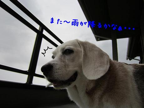 3_20110805153242.jpg