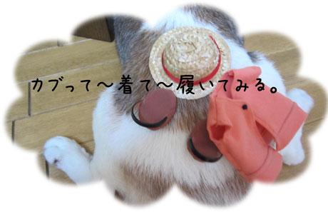 3_20110810154633.jpg