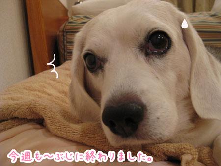 4_20090825120146.jpg