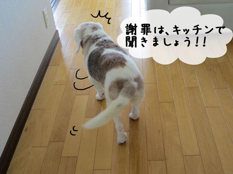 4_20110802171203.jpg