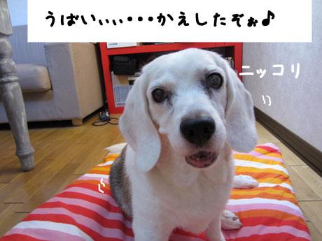 4_20110808143105.jpg