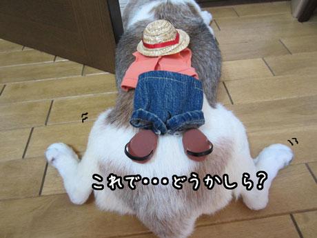 4_20110810153629.jpg