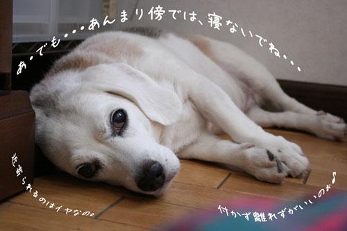 5_20090906111302.jpg
