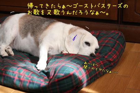 5_20090910201911.jpg