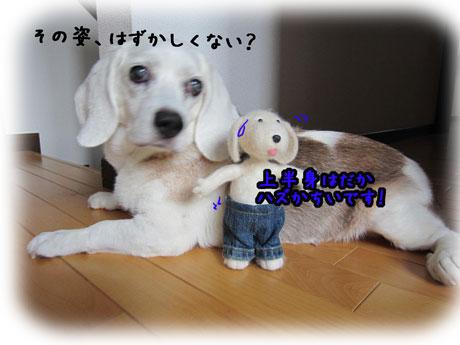 5_20110802171203.jpg