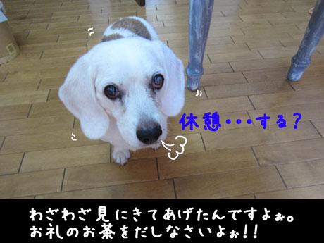 5_20110807145950.jpg