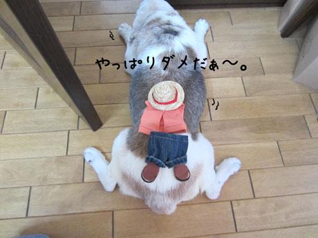 5_20110810153628.jpg