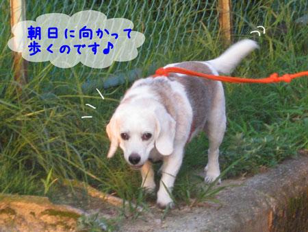 6_20090823121028.jpg