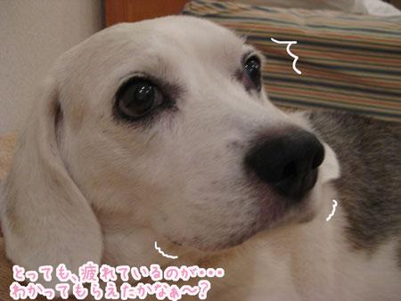6_20090825120146.jpg