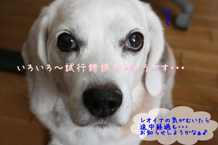7_20090826131342.jpg