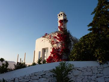 白い壁と赤い花