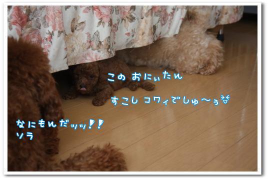 QOqvRp_I.jpg
