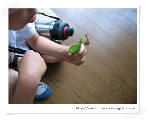 image1102296.jpg