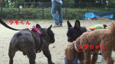 ラモくん&ユラちゃん