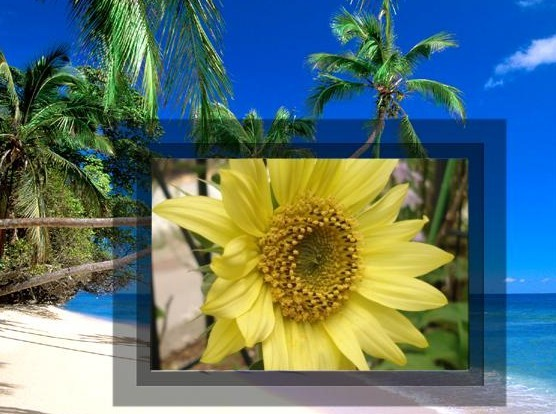 ミニひまわり(一年草)夏らしい季節の花