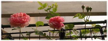 2番花開花中
