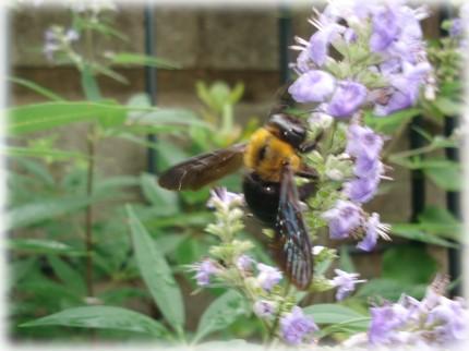 蜂の暑そうなマフラー・・・