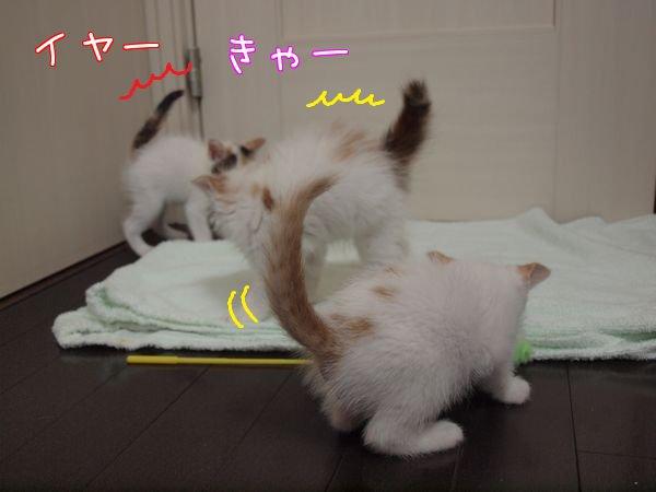 rikukaikuuhouboku20110507 (1)