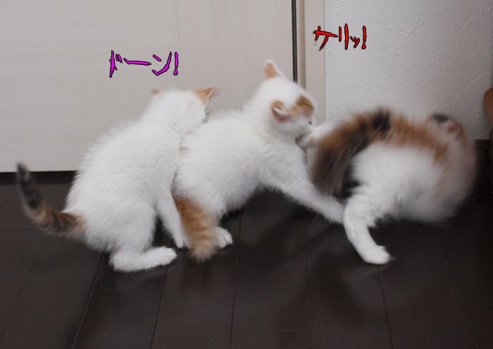 ganbarukaiouenn20110511 (5)