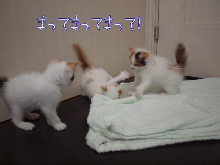 ganbarukaiouenn20110511 (3)