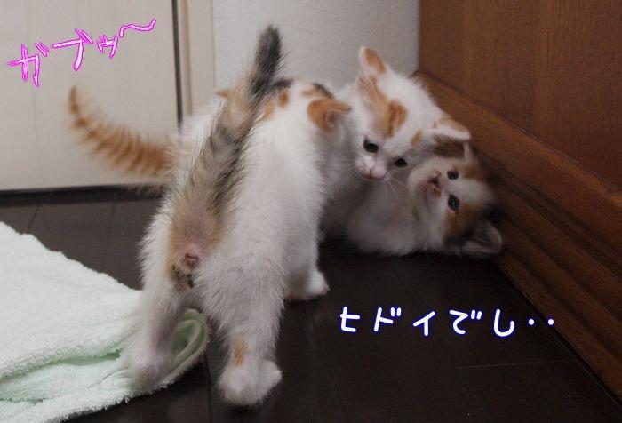 sugoipawa-tibi20110514 (5)