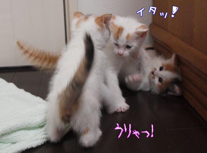 sugoipawa-tibi20110514 (4)