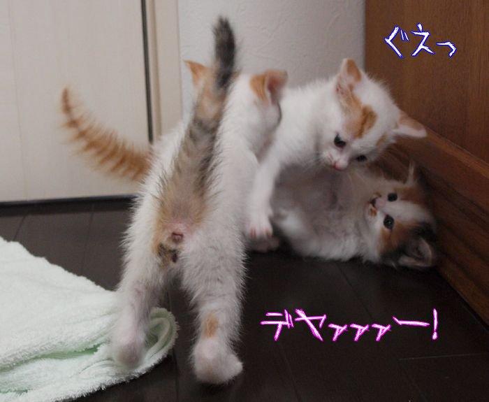 sugoipawa-tibi20110514 (2)