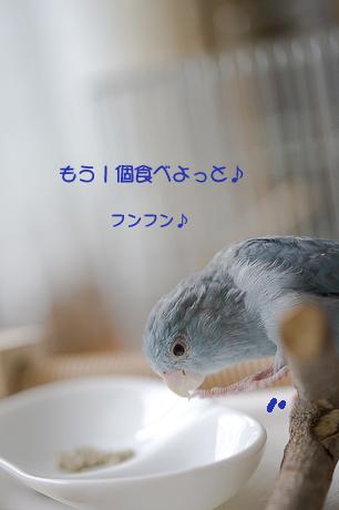 DSC_1239-7-1.jpg