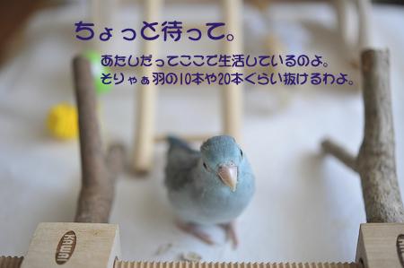 DSC_3956-5.jpg
