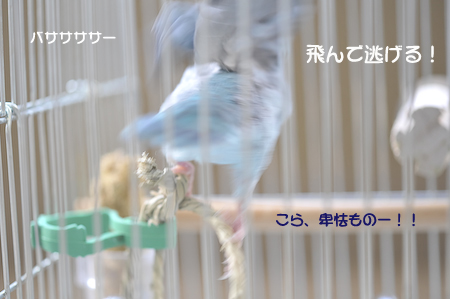 DSC_4222.jpg