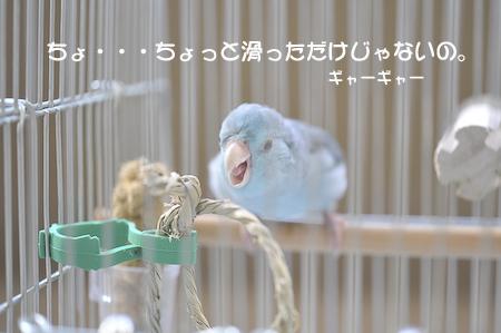 DSC_4224.jpg